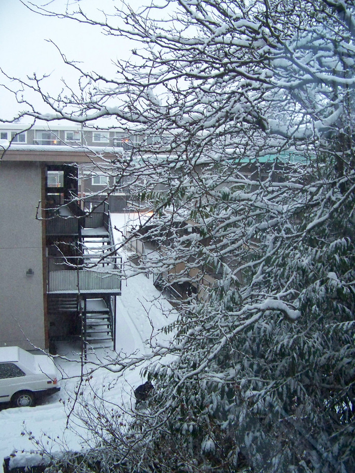 December 21, 2008.  The view out my bedroom window.