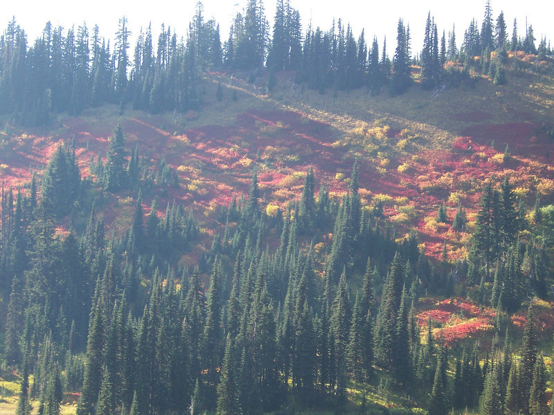 Fall color in the Paradise valley streaked with sunshine.<br /> [Mount Rainier]