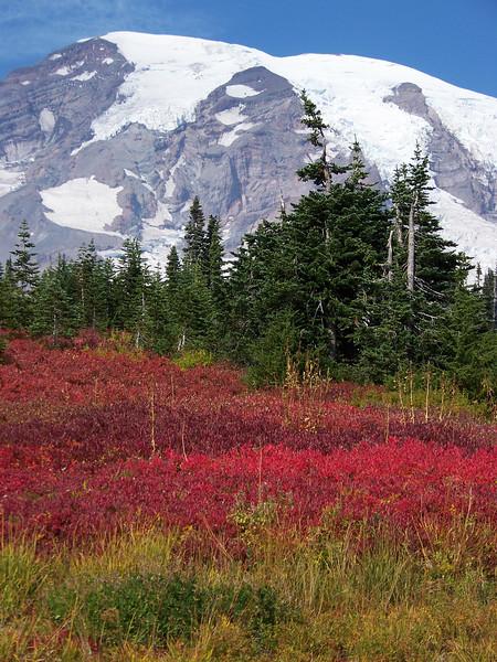 Fall color at Paradise.<br /> [Mount Rainier]