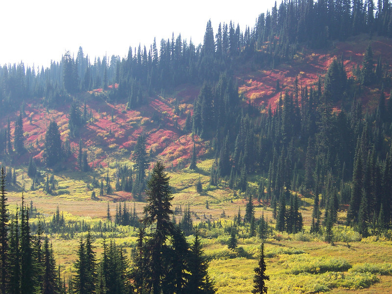 Fall color in the Paradise valley.  I liked the way the sun was playing across the landscape here.<br /> [Mount Rainier]