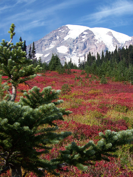 Fall color at Paradise.  I think most of the vivid red leaves seen here are from huckleberry bushes.<br /> [Mount Rainier]