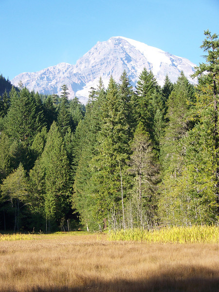 We did the short walk around the Longmire meadows, which are seen here.<br /> [Mount Rainier]