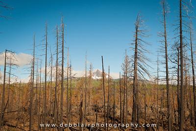 Mt. Washington thru burn area