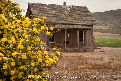 Old Home 1
