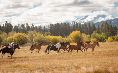 Horses of Black Butte Ranch1