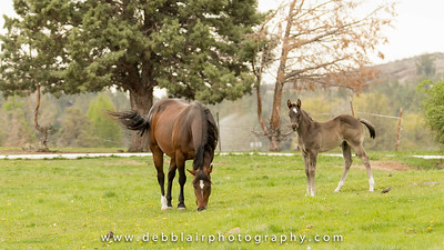 Mom and baby horse 1