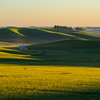 Palouse wheat fields in spring, green fields, evening light, sunset