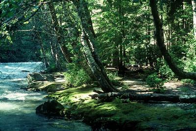 Old McAllester Creek Camp, Thunder Creek