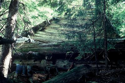 Thunder Creek Scenery