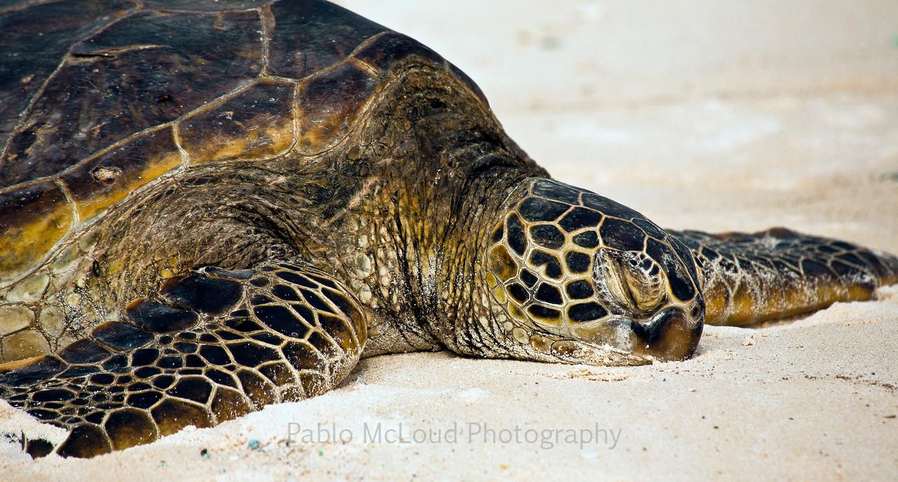 Turtle Respite