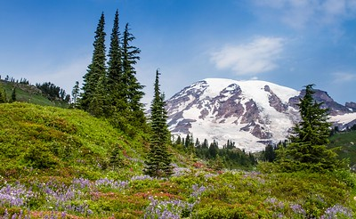 Mt. Rainier from Paradise