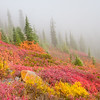 Fall Color, Paradise, Mt. Rainier