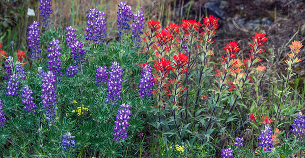 Rowena Wildflowers