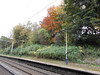 Pic by Liz <br /> <br /> Pic showing the heavy growth of the Bushes on the Manchester Bound platform