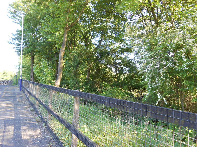 "Pic by Liz <br /> <br /> As Liz said it was very remote where we where with hardly anybody if anybody or anything about<br /> <br /> Many years ago there was a railway line that ran under the Bolton bound platform and it went off to the right through where the trees are now the other side of the fence in cutting  it went on to Patricroft the line was closed sometime soon after 1953 when the Tunnel collapse bit further down the line <br /> <br /> More info about the route can be read here <br /> <br /> <a href=""http://www.forgottenrelics.co.uk/tunnels/cliftonhallcollapse.html"">http://www.forgottenrelics.co.uk/tunnels/cliftonhallcollapse.html</a><br /> <br /> and a map i found on Wiki can be seen here it's the top right LIne map you want <br /> <br /> <a href=""http://upload.wikimedia.org/wikipedia/commons/3/3b/Bromshall%2C_Clifton_%28Molyneux%29%2C_Hay%2C_Liskeard%2C_Patricroft_%26_Uttoxeter_RJD_148.jpg"">http://upload.wikimedia.org/wikipedia/commons/3/3b/Bromshall%2C_Clifton_%28Molyneux%29%2C_Hay%2C_Liskeard%2C_Patricroft_%26_Uttoxeter_RJD_148.jpg</a>"
