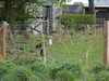 picture by Liz <br /> <br /> Chickens in the field across from the Blackpool bound platform