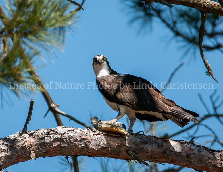 Osprey Don't Even Think About It