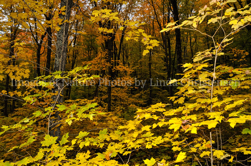 Golden Forest View