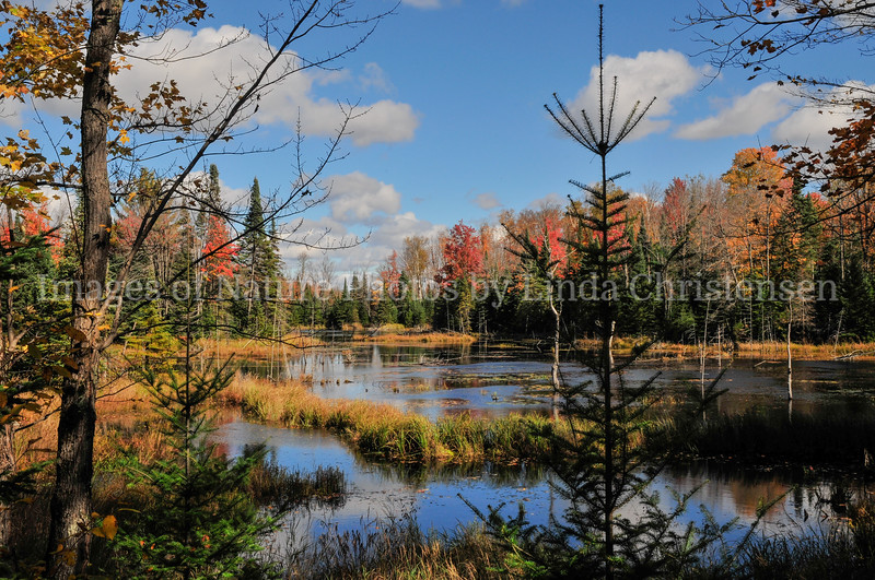 Autumn Back Country l