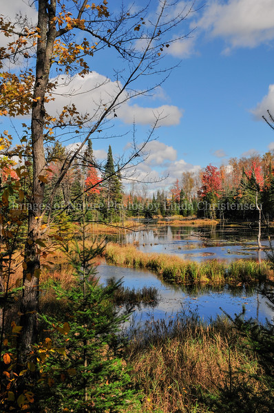 Autumn Back Country p