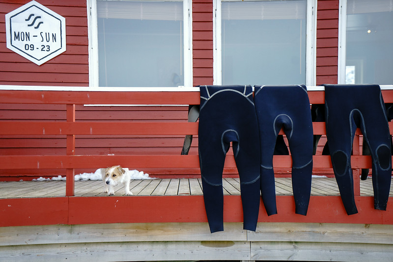 Destination : Arctic Circle                                        A small dog watches over wetsuits laid out to dry at a small surf lodge on the Arctic Circle. Chris Burkard fell in love with photographing the juxtaposition of surfing  in the frigid weather of the Arctic Circle.