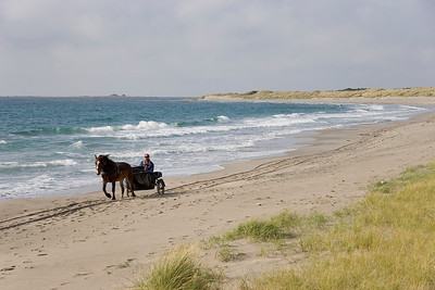 Horse on the beach