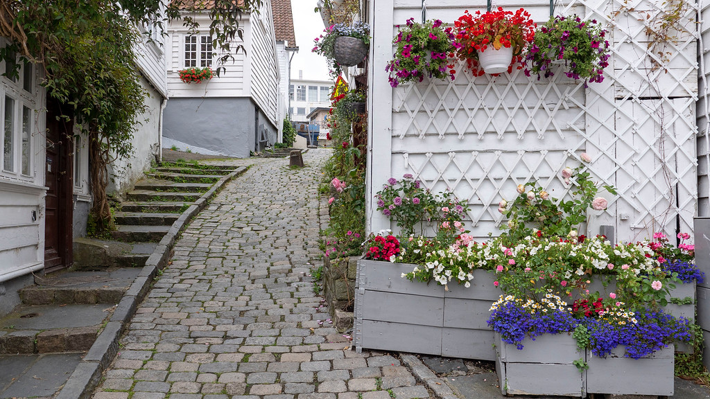 Gardens in beautiful Gamle Stavanger, Old Stavanger - Things to do in Stavanger Old Town