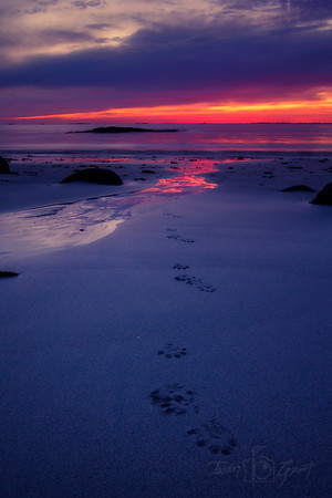 Footprints of the Otter