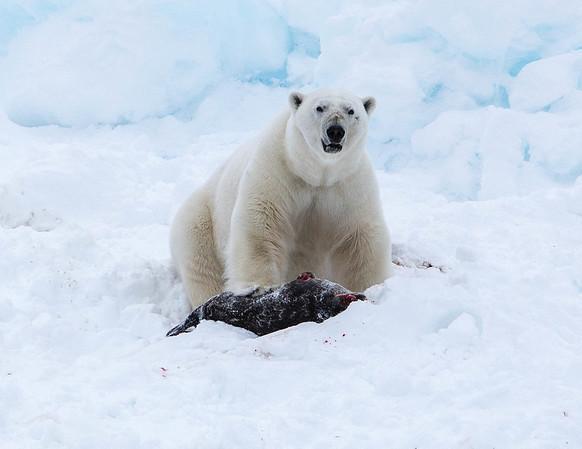 Norway: Fjords to Arctic Svalbard (2015)