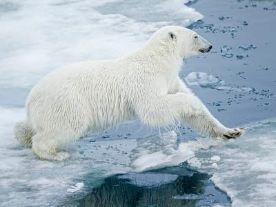 Norway/Svalbard - July 2011