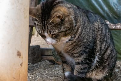 Mikesch war mehr an Mäusen und Ratten interessiert.