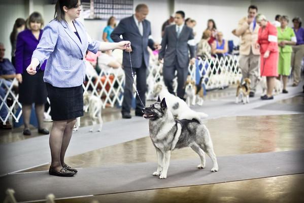2013-05-11 Denton Dog Show