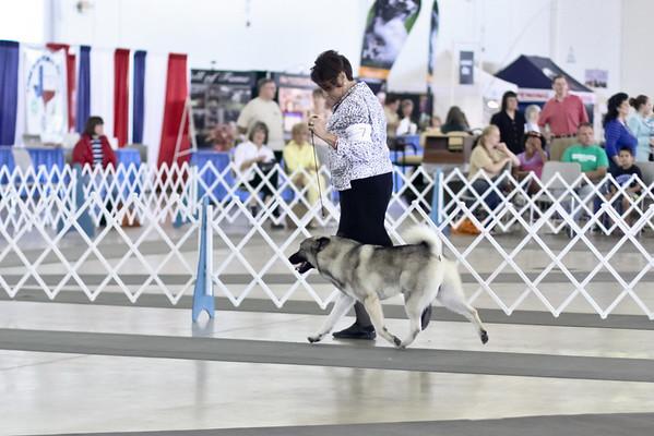 2013-07-05 Dallas Norwegian Elkhounds