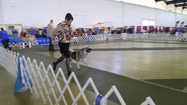2013-07-07 Dallas Dog Show SUNDAY