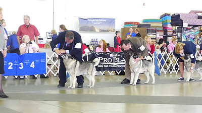 009 Best of Breed Lineup