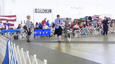 008 Best of Breed --Winners Dog-- Bergen with Sarah