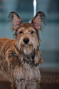 2014 Peninsula SPCA Fur Ball | 026