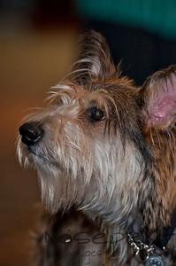 2014 Peninsula SPCA Fur Ball | 030