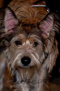 2014 Peninsula SPCA Fur Ball | 012