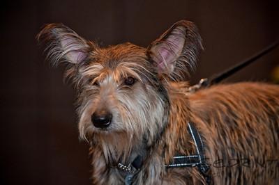 2014 Peninsula SPCA Fur Ball | 035