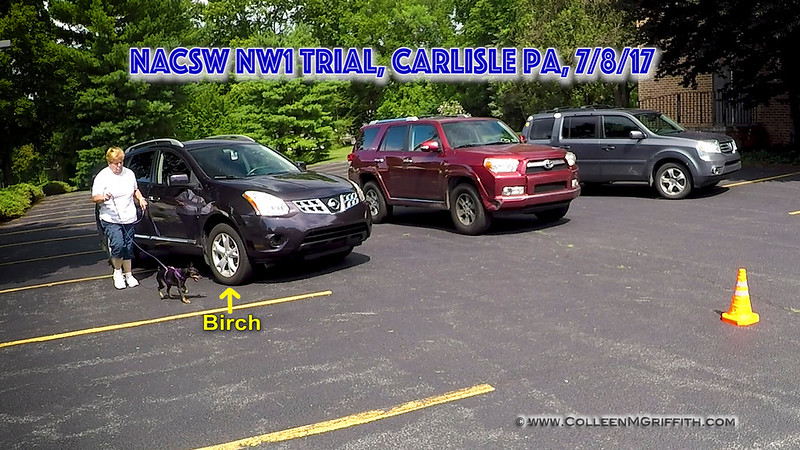PREMIUM LICENSE, NW1 Vehicle Search: Sharon Bolles and Trace