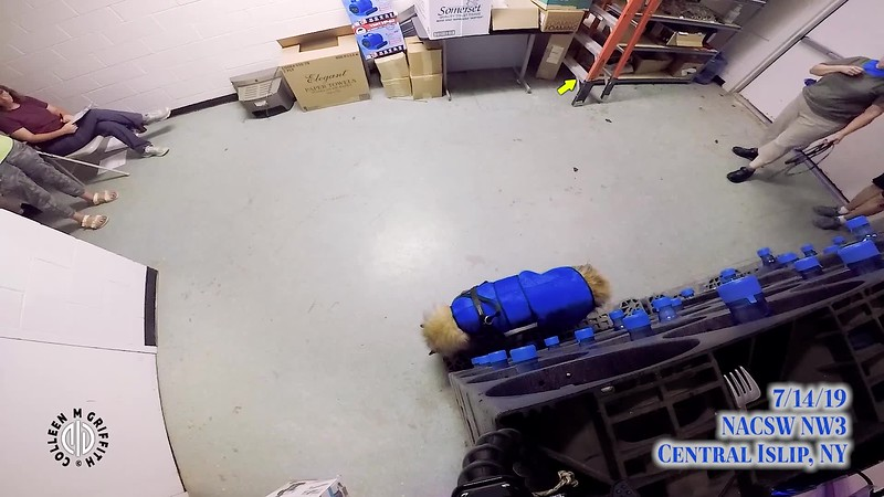 Premium Sample Video, Combination Video of all searches by one team from the Sunday NW3 trial