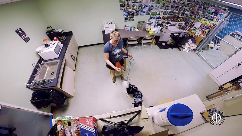 Standard Sample Video, Saturday NW3, Interior Search Area #2