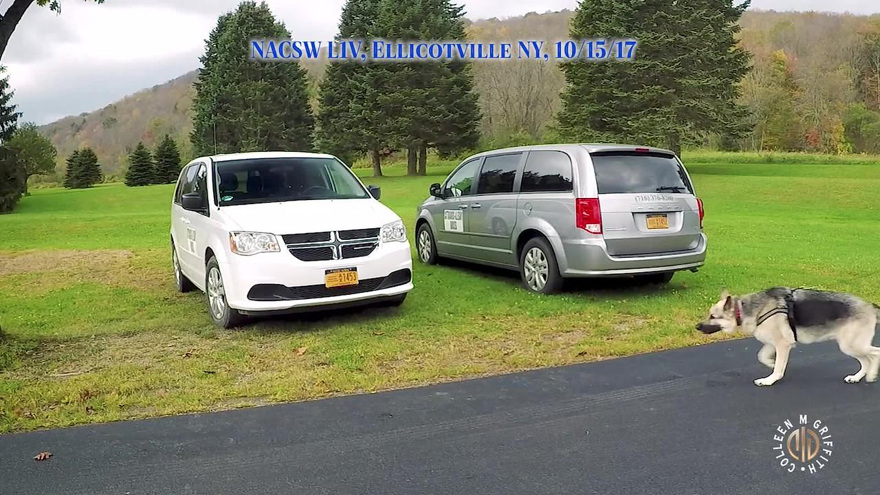 Standard License, Vans Search (2)