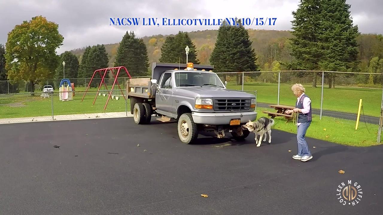 Standard License, Dump Truck (1) Search