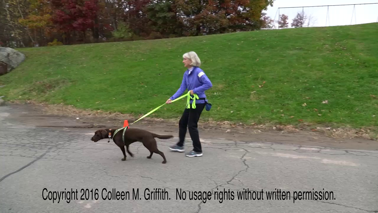 Leslie Wharton and Layla, Vehicles, 30 October 2016, Hawley PA NW3 Trial