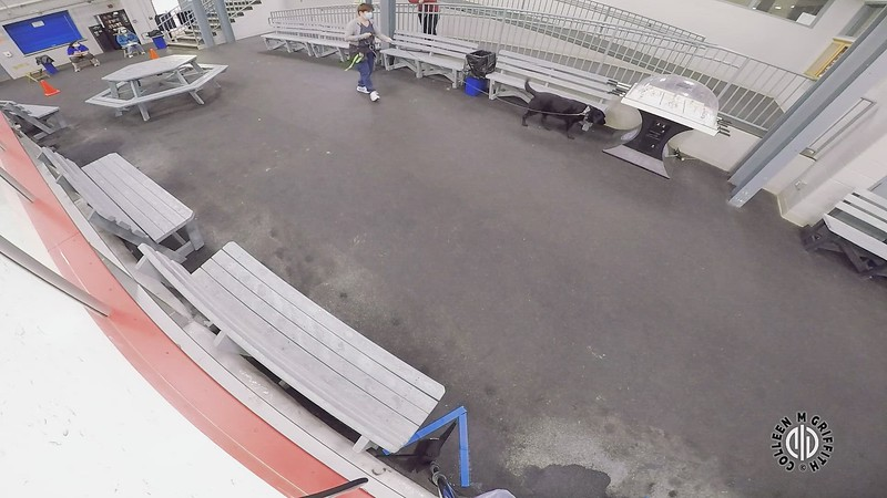 """Elite Standard Edited Video: Elite #4 """"Rink Viewing Area"""", Camera Angle 2 of 3"""