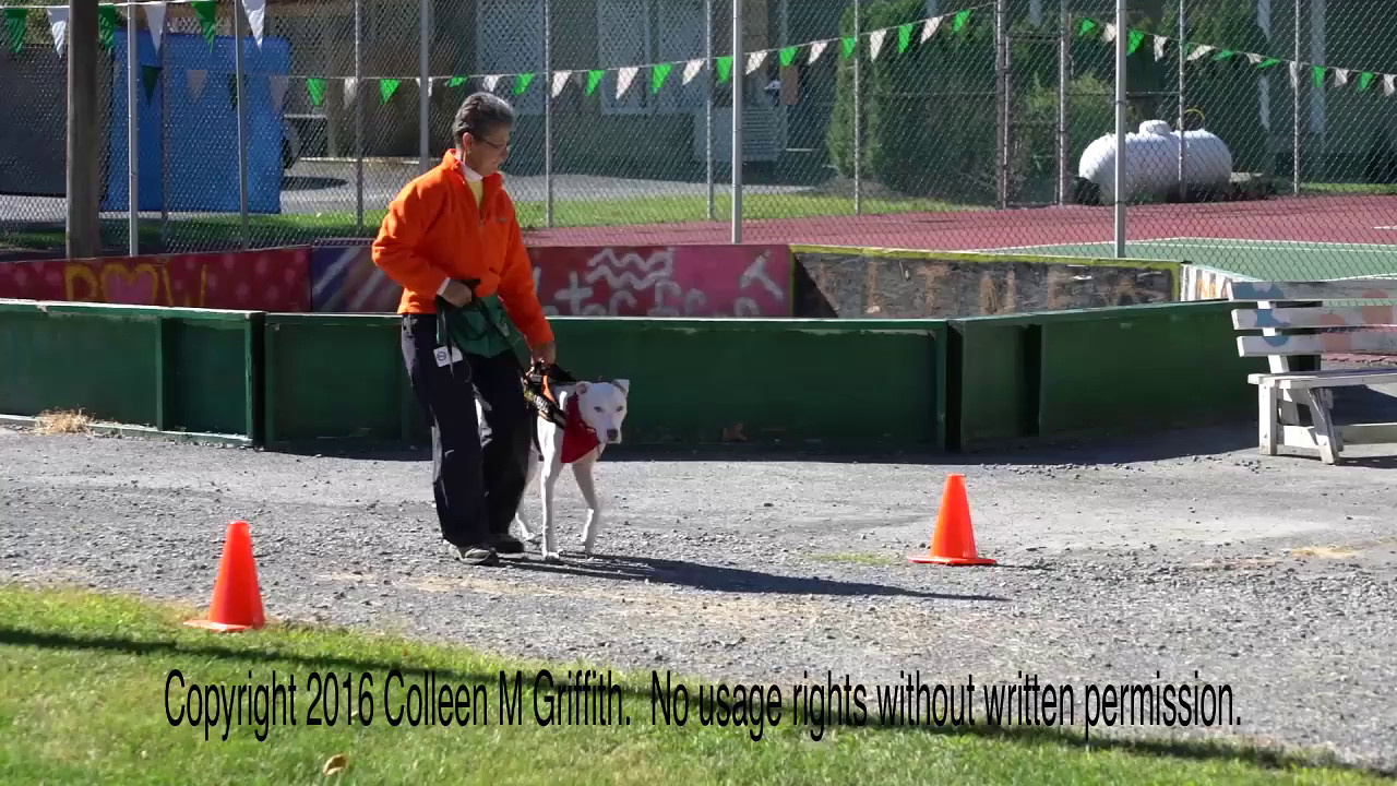 Jeanne Jarmoska and Cozzie, NW2 Vehicles, Sept 25 2016
