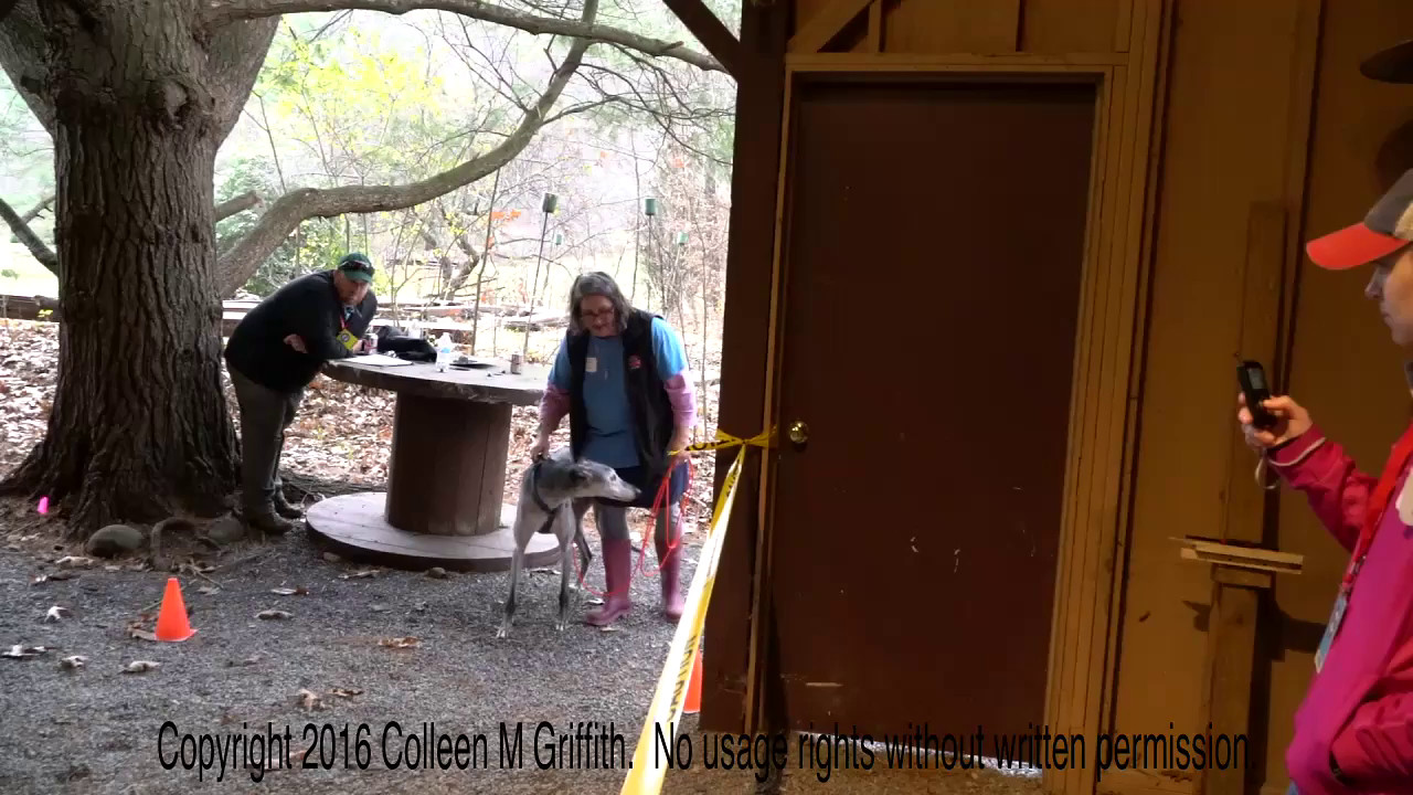 Holly Roche & BoomBoom, 9th Place Exterior, NW3 Trout Run, Video by Colleen M. Griffith