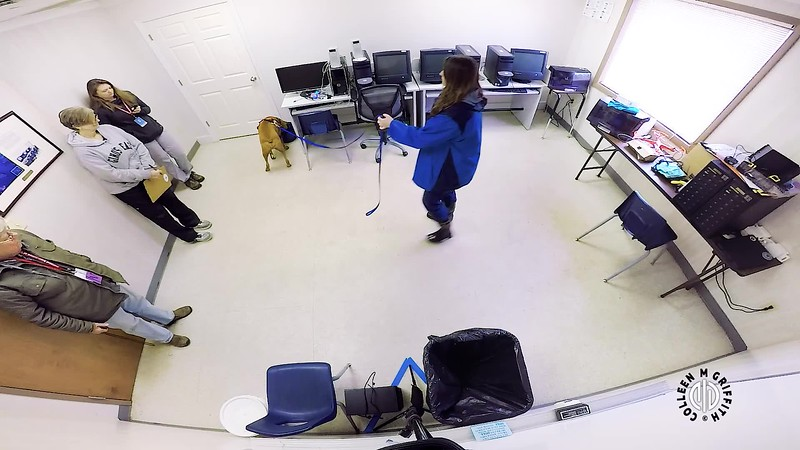 Standard Sample Video, NW3 Interior 1